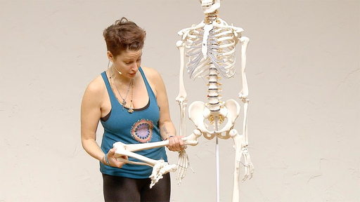 Video thumbnail for: Yoga Anatomy - Anatomical insight on the hip and knee joint