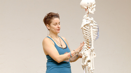Video thumbnail for: Yoga Anatomy - Anatomical insight on the spine