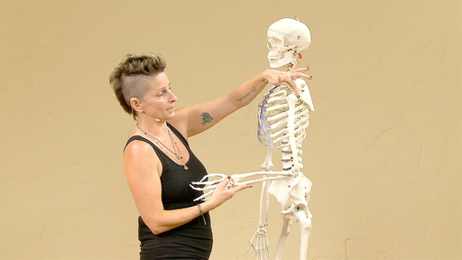 Video thumbnail for: The Skeleton and common Vinyasa Flow injuries